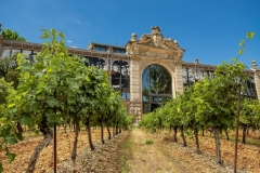 fete vin rose halles narbonne montage vigne 2016