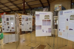 halles_de_narbonne_association_narbonnaise_genealogie_exposition_personnages_celebres_nes_a_narbonne-01