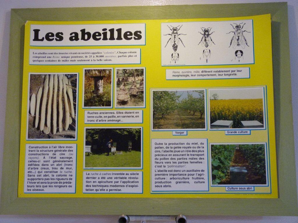 halles_narbonne_la-ruche-des-halles_miel_propolis_gelee-royale_sucettes_bonbons_38