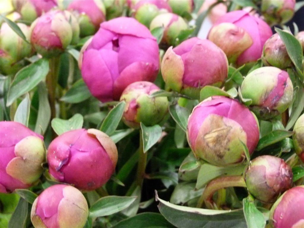 rolande-fleuriste-halles-narbonne-2011-01